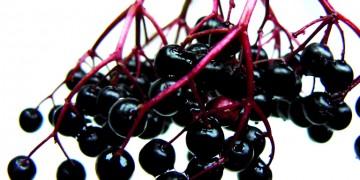 Haschberg Elderberry