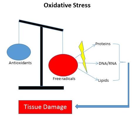 Oxidative stress2